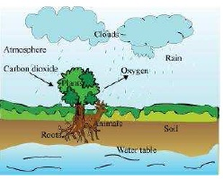 NCERT Solutions for Class 7th Science Chapter 17   Forests Our Lifeline Image by AglaSem