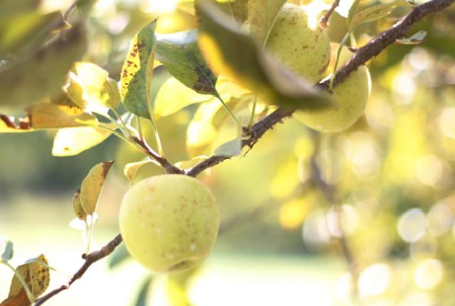 Apple | FoodLovesWriting.com