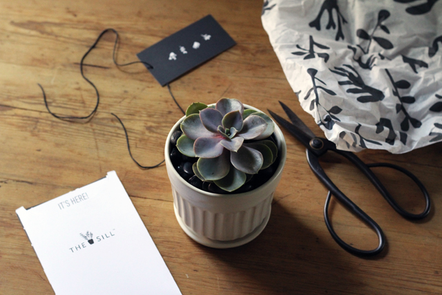 the sill - succulent packaging