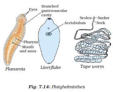 NCERT Class IX Science Chapter 7 Diversity in Living Organisms Image by AglaSem