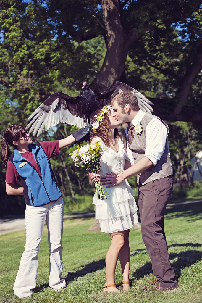 Wedding Vulture