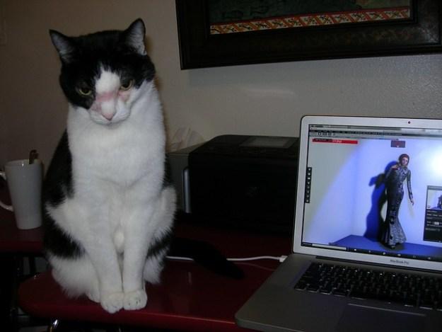 Blog Supervisor