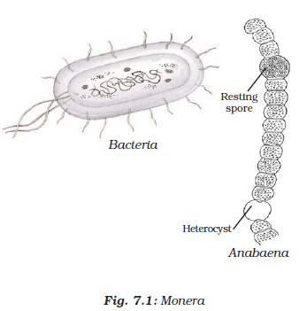 NCERT Class IX Science Chapter 7 Diversity in Living Organisms