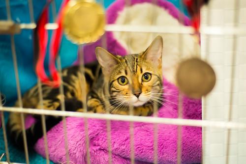 Cat Exhibition