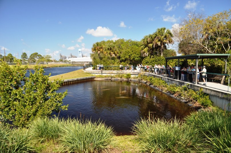 Viewing Area at Manatee Park, Fort Myers, Fla.