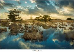 Mooie reflecties in het water van de Peel