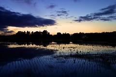 Evening dusk