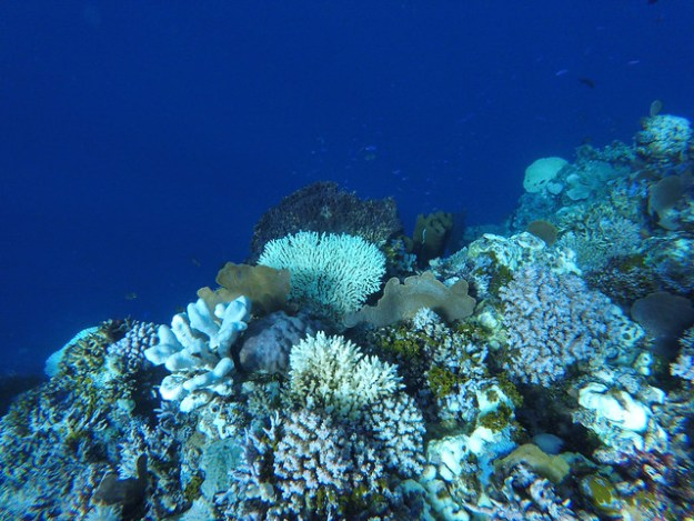 Deep blue dropoff. Bomba Atoll, Togean Islands