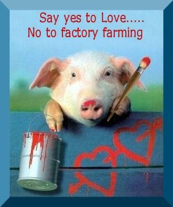 no-to-factory-farms