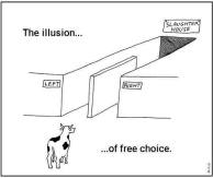 free choice illusion