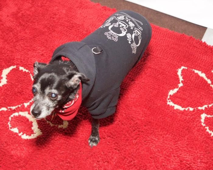 Pet Fashion Week 17 FW Fashiondailymag PaulMorejon 6