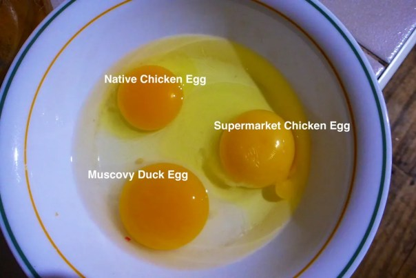 Comparing eggs in size and colour.