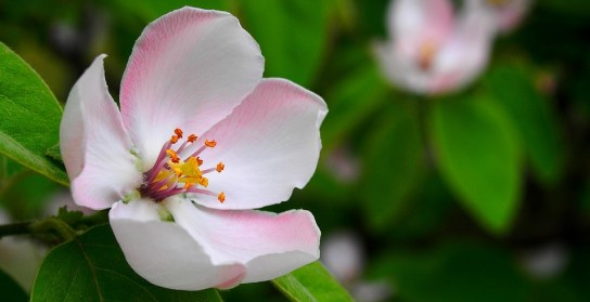 flower-1360468_960_720