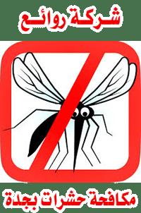 الحشرات بجدة