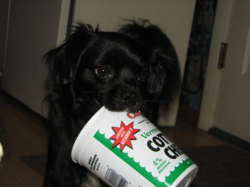 Large Of Cottage Cheese For Dogs