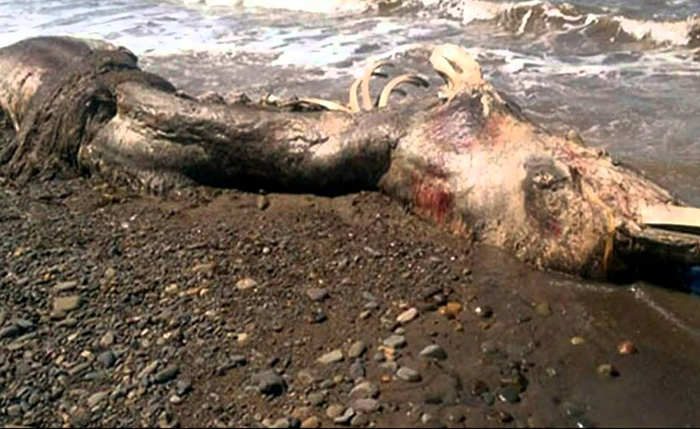 8-Most-Terrifying-Creatures-Spotted-On-This-Planet (8)