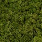 Moss (フィールグッドのスカンディア モス)