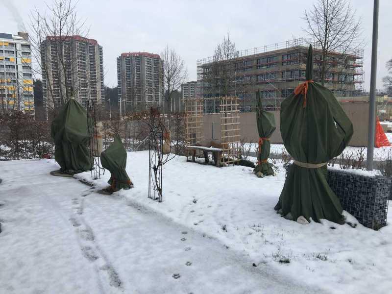 Winterstimmung Feigengarten Januar 2016 (3)