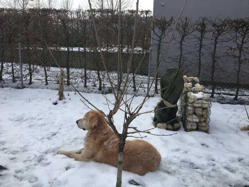 Vichy im Feigengarten Winter 2016