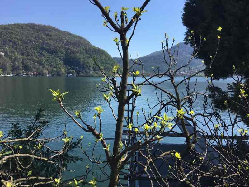 Auch die Original Ponte Tresa Feige spürt den Frühling