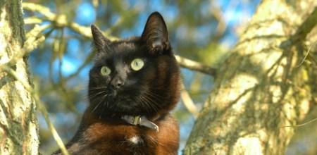 black-cat-1402633