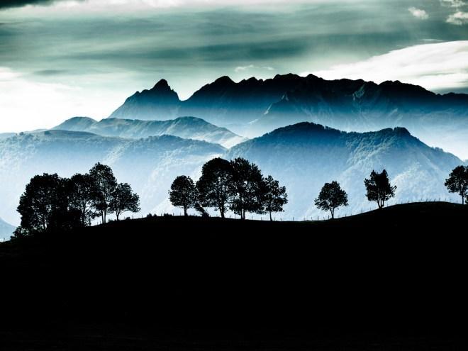TREELINE - Photographie numérique (30x40cm) 2012