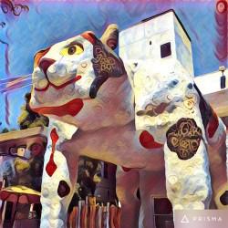 big-cat_1