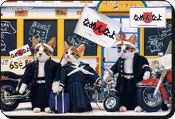 20051225 98878 【動画】仲良し犬と猫。残念な結末!なめたらアカンぜよ!