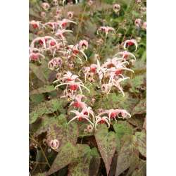 Small Crop Of Plant Delights Nursery