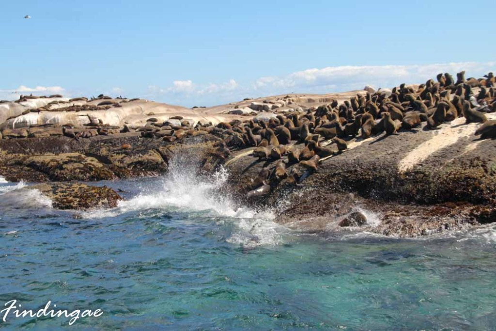 Seal Island capetown