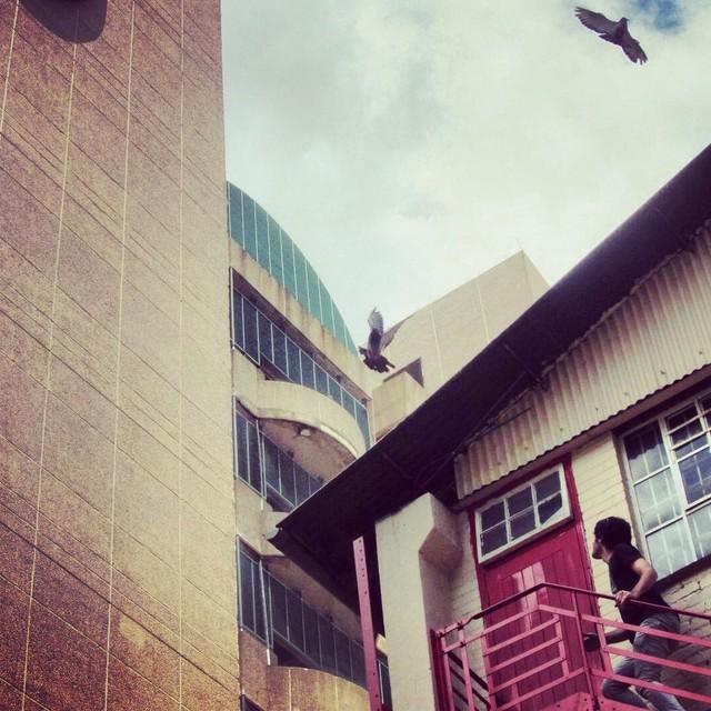 Inner city pigeons