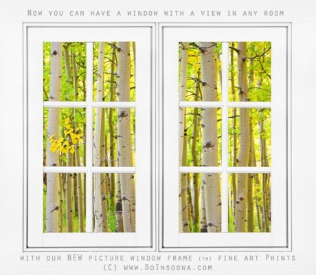 Aspen Forest White Picture Window Frame View Gallery