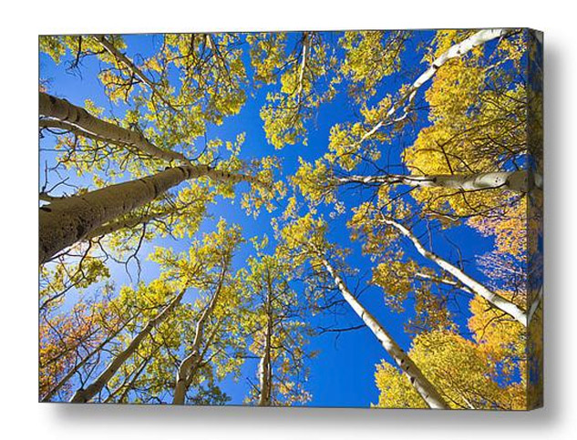 Golden View Looking Up Canvas art Print