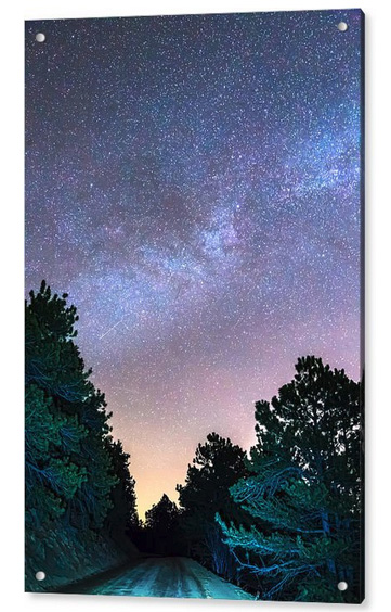 Forest Night Light Acrylic Print
