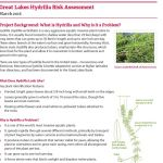 Great Lakes Hydrilla Risk Assessment Factsheets are here!
