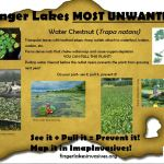 Water Chestnut Pledge Card!