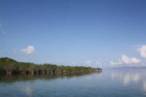 Mangrove trees at the Magdiwang port of Sibuyan Island, Romblon.