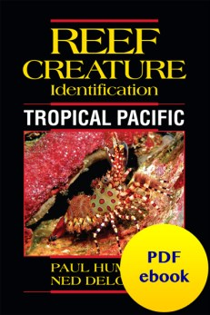 Reef Creature Identification Tropical Pacific ebook