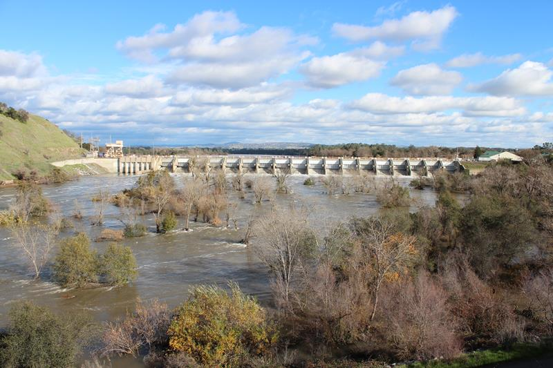 Larger Steelhead Show on American River