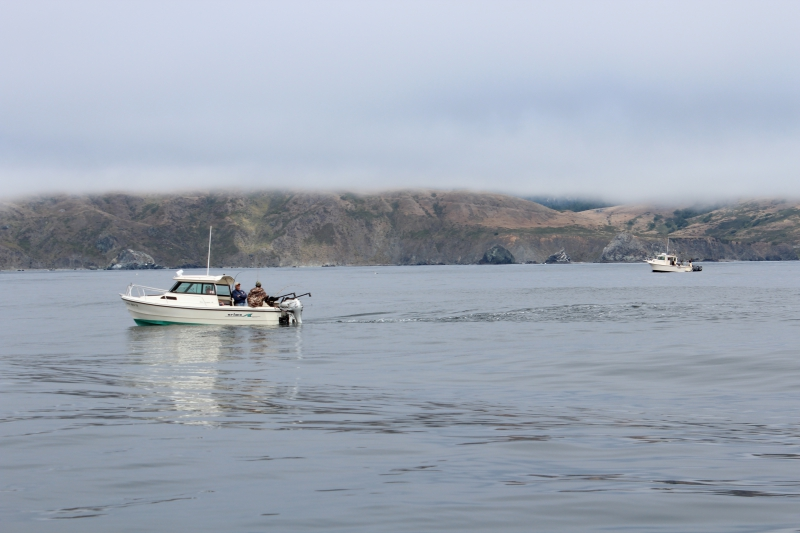 Pacific Fishery Management Council Chooses Options For 2017 Salmon Season