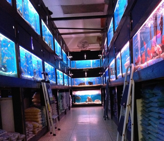 405 Tropical Fish | Fish Stores Near Me