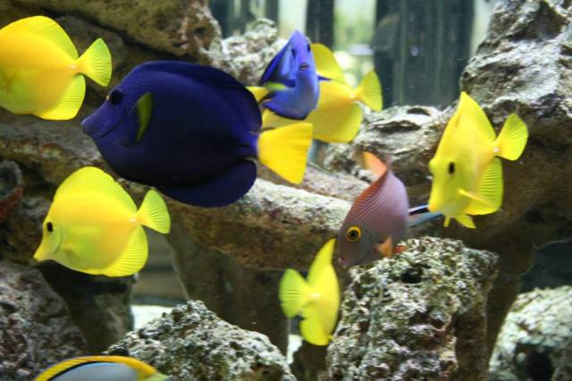 Fish Stores in CA | Find local fish and aquarium stores