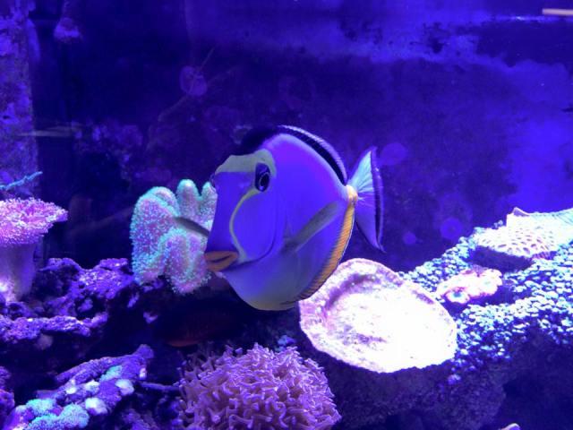 Fish Stores in CA | Find local fish and aquarium stores