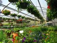 greenhouses spring 1