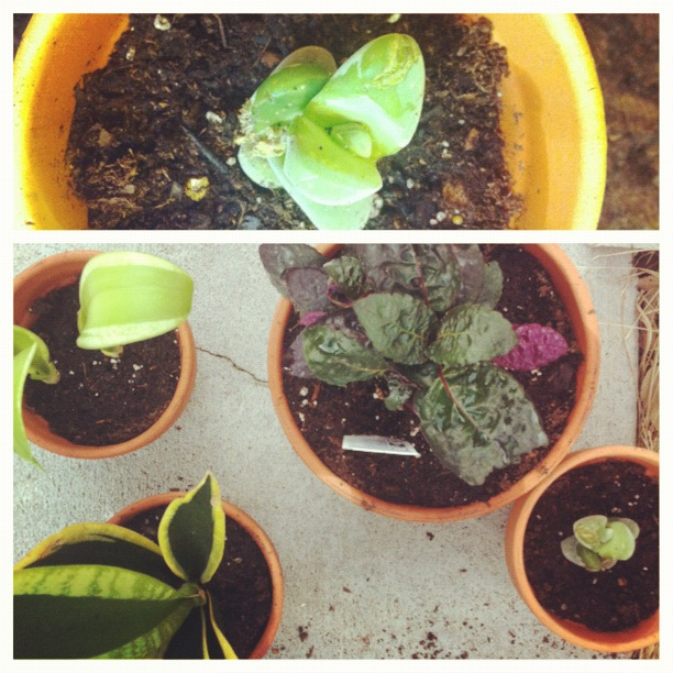 Houseplants, Potted