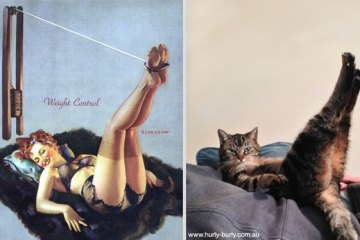 cats-that-look-like-pin-up-girls-7