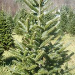 Green Christmas Tips