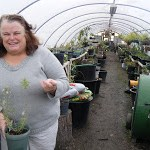 Organic Greenhouse Owner Shares Growing Tips