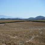 How Green is Switchgrass Farming?