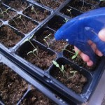 Seedlings Making Progress